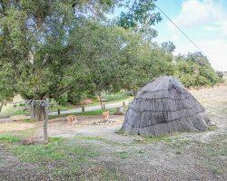 Camp_035