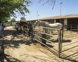 stables-corrals_0001
