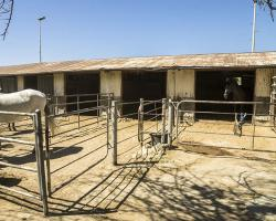 stables-corrals_0002