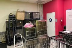 Pet-Store-Image-006