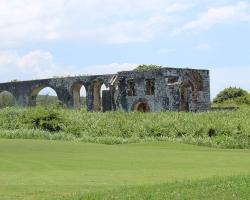 CH Golf Horse_007