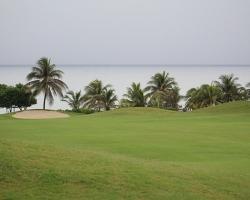 CH Golf Horse_010