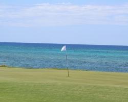 CH Golf Horse_020