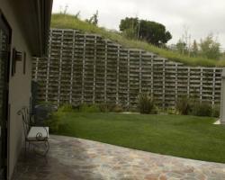 backyard_0064