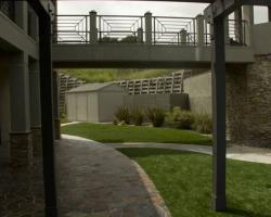 backyard_0071