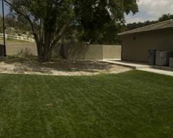 backyard_0085