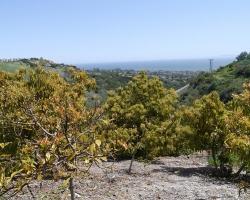 Orchard_069