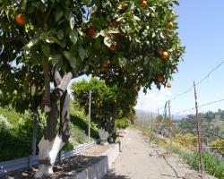 Orchard_098
