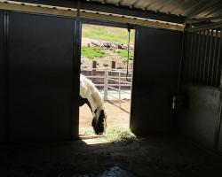 stables_0009